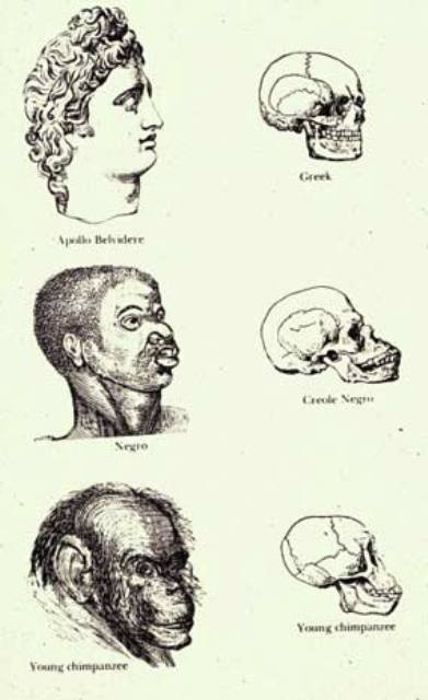 races_and_skulls-1